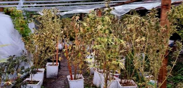 Акция в с.Крайници! Разкриха наркооранжерия и боеприпаси в имоти на Туята
