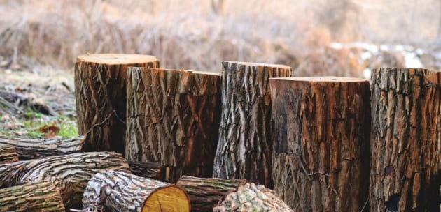 Кюстендилските полицаи заловиха двама бракониери на дърва
