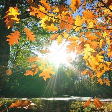 След хладното утро, денят ще е слънчев и по-топъл