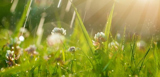 Сутринта слънчево, след обяд отново облаци и дъжд